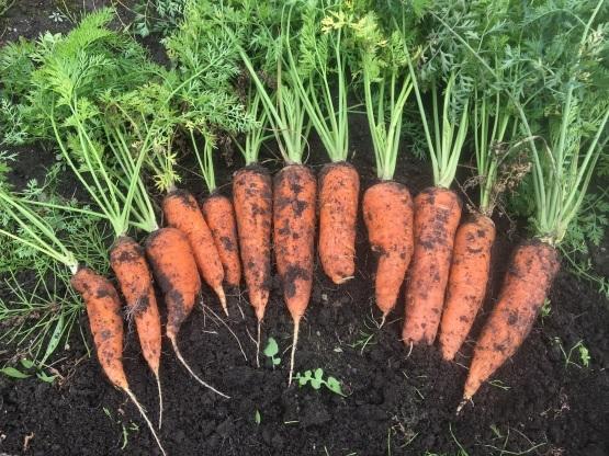 一筋縄ではいかない野菜づくり_a0356060_13471612.jpg