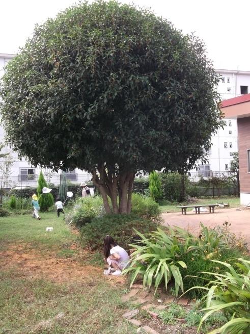 キンモクセイの木の下で_f0334882_18002324.jpg