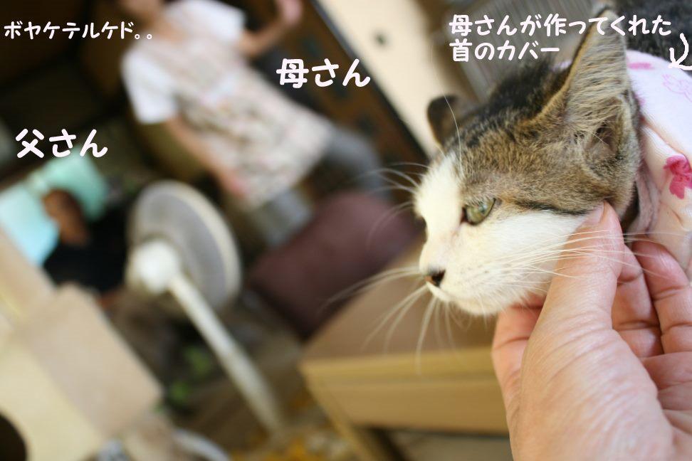くりっこちゃん 新生活スタート!_f0242002_14133741.jpg