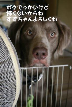くりっこちゃん 新生活スタート!_f0242002_14140344.jpg
