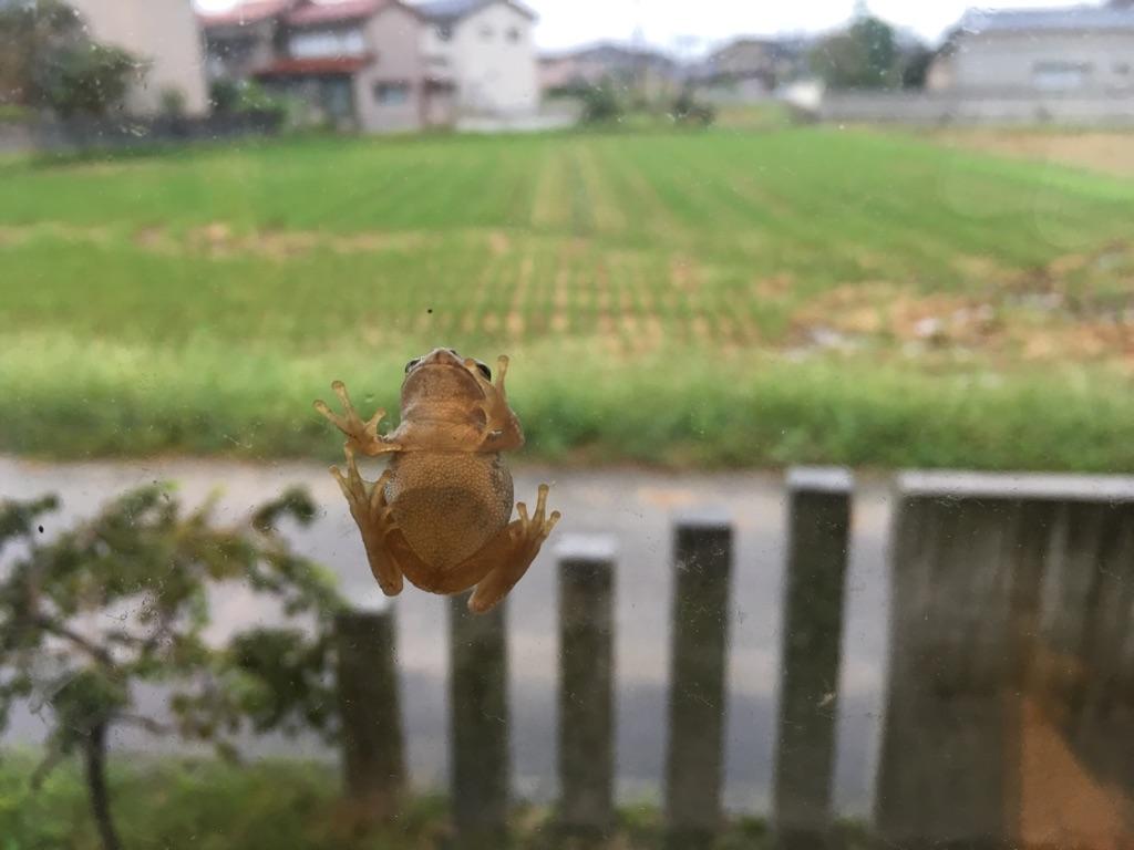 【高岡店】パークヨガ中止のお知らせ_e0151409_1511891.jpg