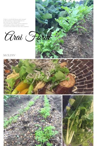 秋からの芽…Arai Farm_d0049817_09281355.jpg