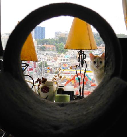 キャットタワーのトンネル越しのオルウェンくん。_e0356356_18350113.jpg