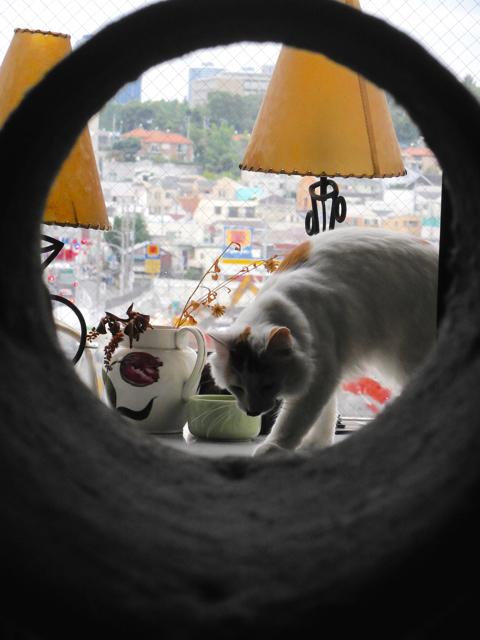 キャットタワーのトンネル越しのオルウェンくん。_e0356356_18382727.jpg