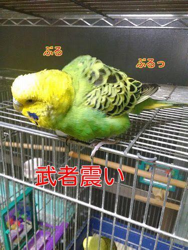 f0196665_2203090.jpg