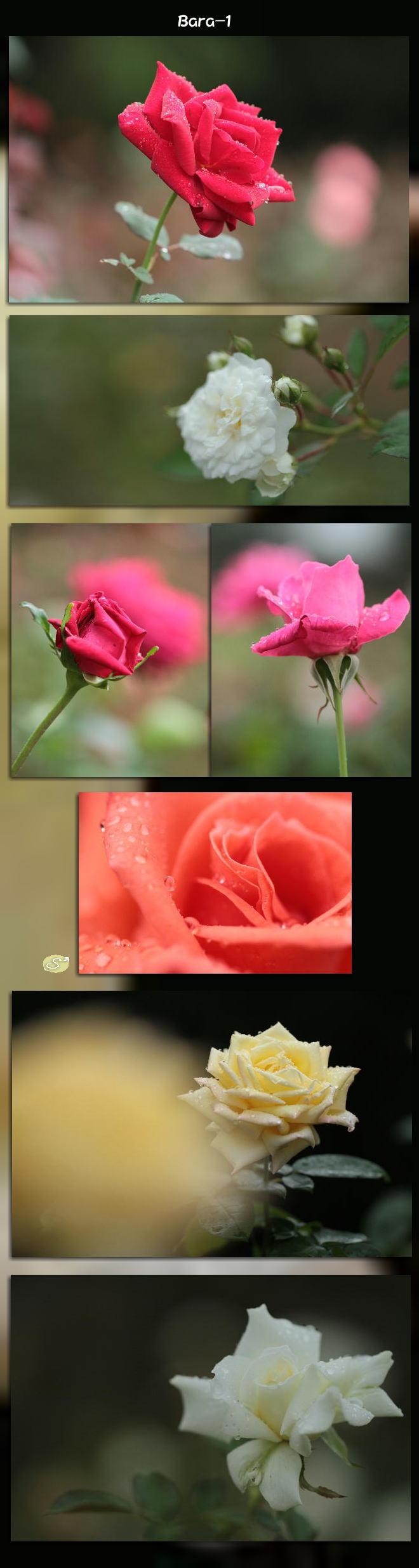 f0164592_1474970.jpg