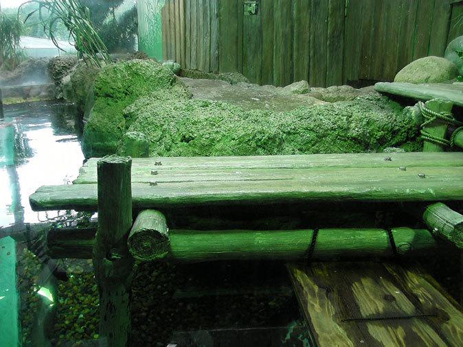 しながわ水族館:東京湾に注ぐ川~品川と海_b0355317_11435553.jpg