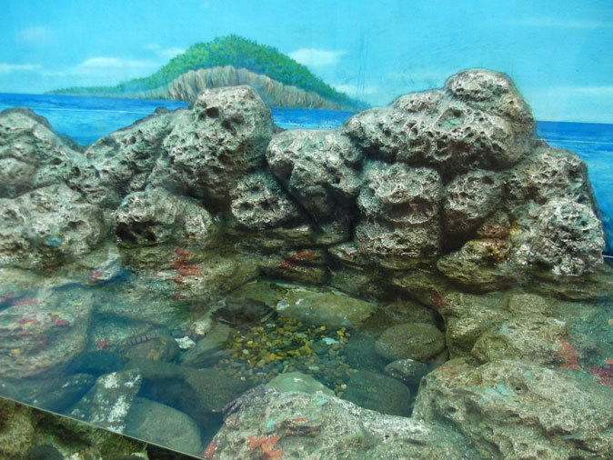 しながわ水族館:東京湾に注ぐ川~品川と海_b0355317_11461575.jpg