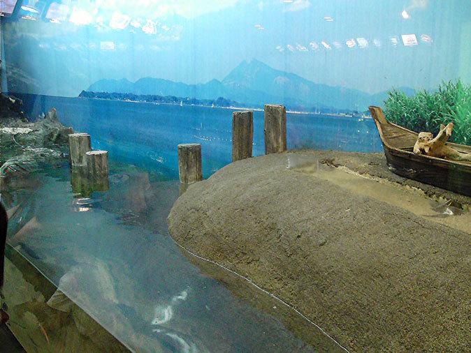 しながわ水族館:東京湾に注ぐ川~品川と海_b0355317_11515048.jpg