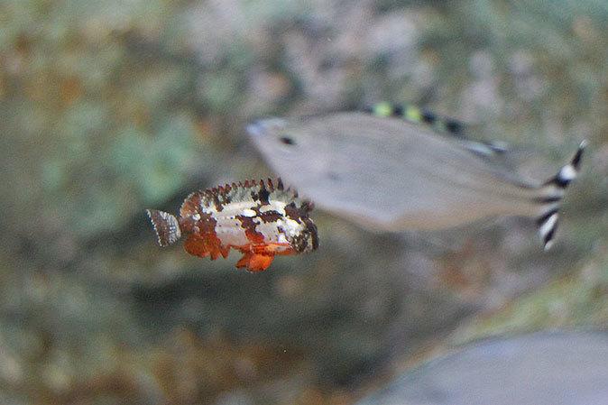 しながわ水族館:東京湾に注ぐ川~品川と海_b0355317_11544976.jpg