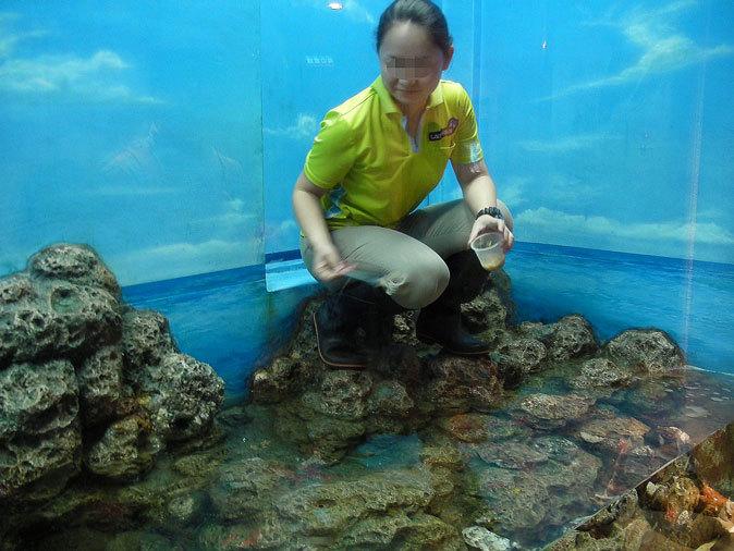 しながわ水族館:東京湾に注ぐ川~品川と海_b0355317_12083993.jpg