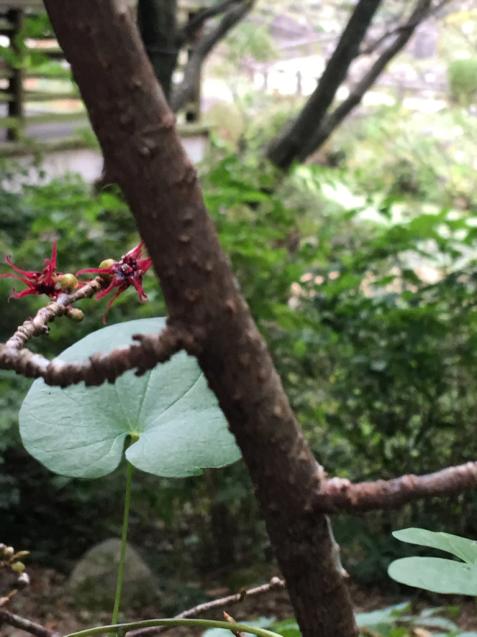 六甲高山植物園_d0337937_00051027.jpg