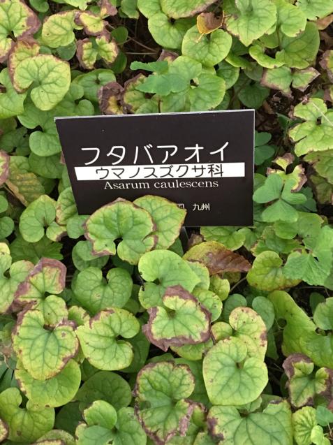 六甲高山植物園_d0337937_00230577.jpg