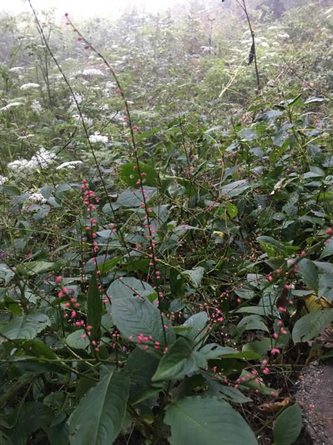 六甲高山植物園_d0337937_00230701.jpg