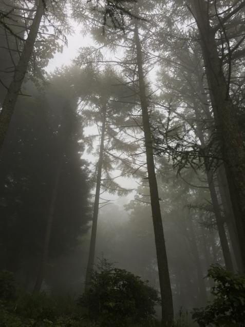 六甲高山植物園_d0337937_00230975.jpg
