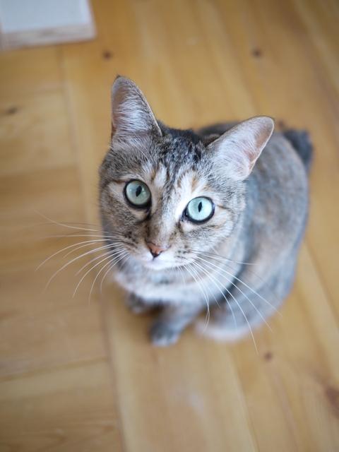 猫のお留守番 うたちゃんマチルダちゃん編。_a0143140_22134542.jpg
