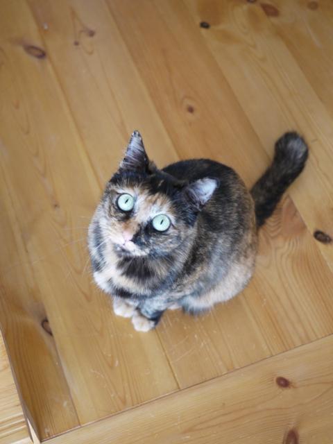 猫のお留守番 うたちゃんマチルダちゃん編。_a0143140_22141696.jpg