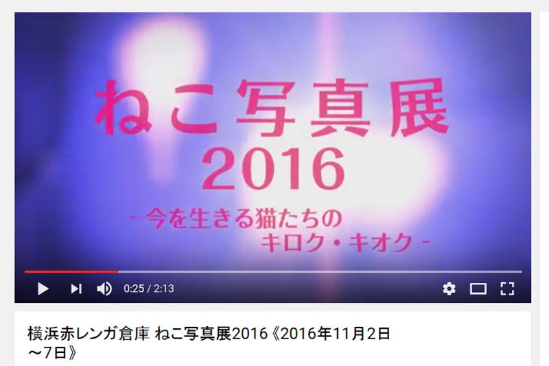横浜赤レンガ倉庫 ねこ写真展 2016  ~今を生きる猫たちのキロク・キオク~_c0194541_1163678.jpg