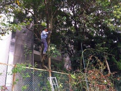 2016年10月月例会「肥料の準備」樹木と草花の整理_a0094959_234101.jpg