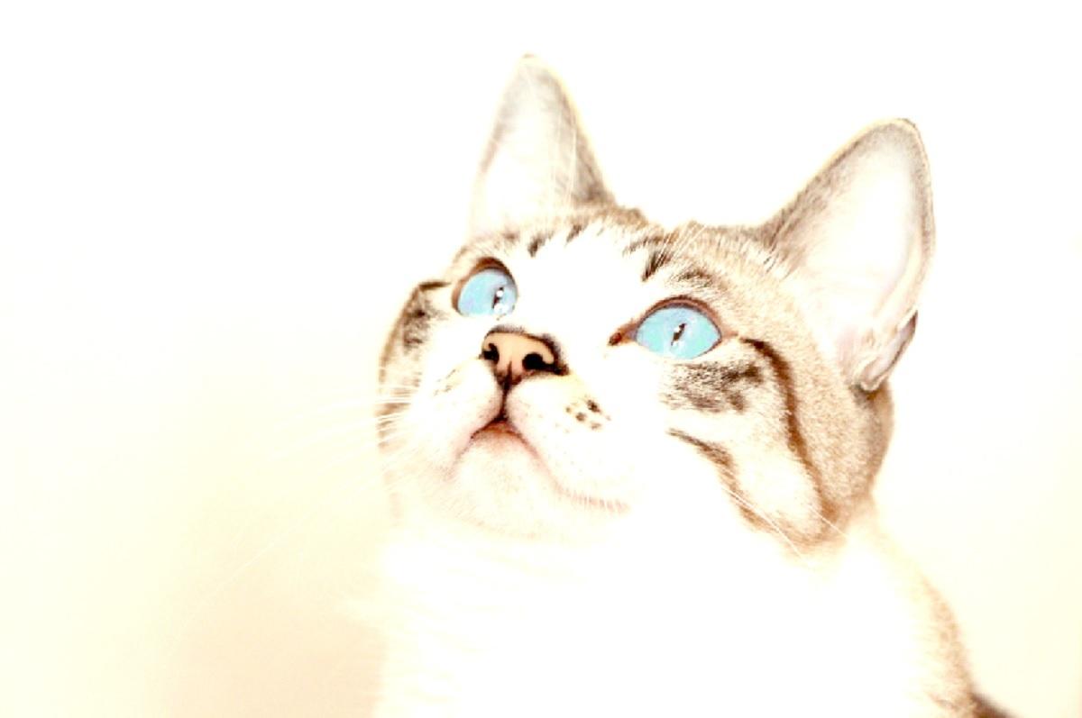 ギンちゃんの目は青い_a0333195_14435104.jpg