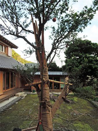 山泰荘にザクロの樹が植えられました。_c0195909_17193992.jpg