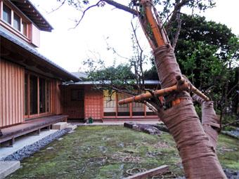 山泰荘にザクロの樹が植えられました。_c0195909_17194460.jpg