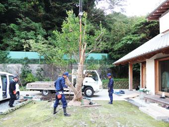 山泰荘にザクロの樹が植えられました。_c0195909_17195244.jpg