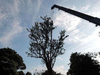 山泰荘にザクロの樹が植えられました。_c0195909_1720036.jpg