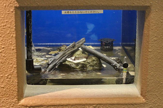 しながわ水族館:品川と海_b0355317_22574325.jpg