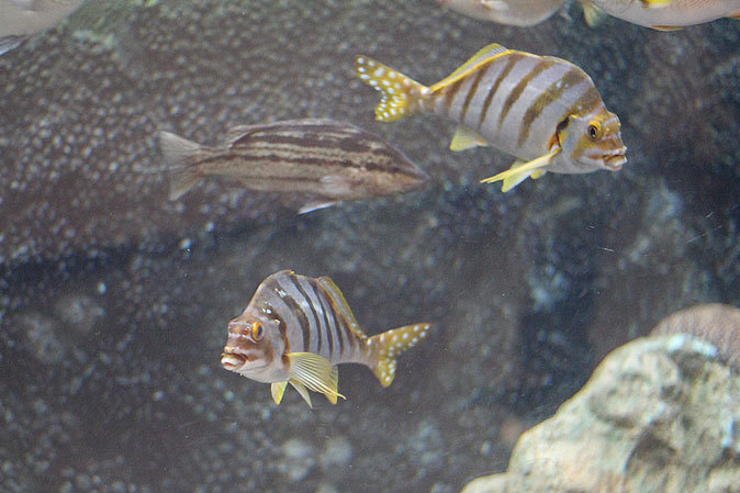 しながわ水族館:品川と海_b0355317_23010074.jpg