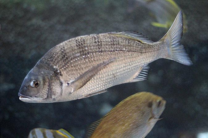 しながわ水族館:品川と海_b0355317_23015077.jpg