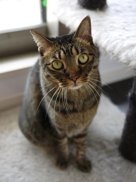 猫のお留守番 ウィンクくんララちゃんピケちゃんエンジェルちゃん編。_a0143140_17312453.jpg