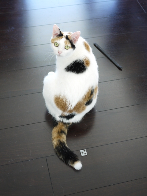 猫のお留守番 ウィンクくんララちゃんピケちゃんエンジェルちゃん編。_a0143140_17334763.jpg