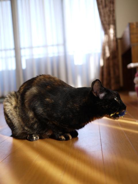 猫のお留守番 ワサビちゃん天ちゃん麦くん茶くん編。_a0143140_17385359.jpg