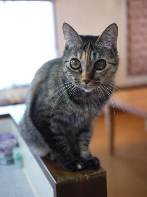 猫のお留守番 ワサビちゃん天ちゃん麦くん茶くん編。_a0143140_17404055.jpg