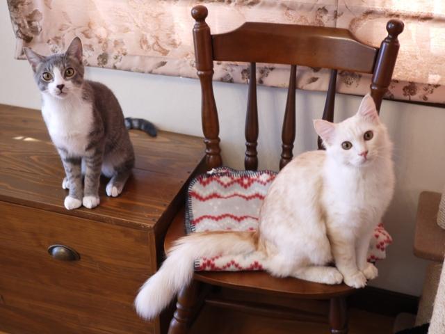 猫のお留守番 ワサビちゃん天ちゃん麦くん茶くん編。_a0143140_17415872.jpg