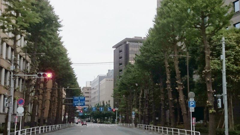東京オリンピック  300本の街路樹が危ない‼️_d0237757_23403268.jpg