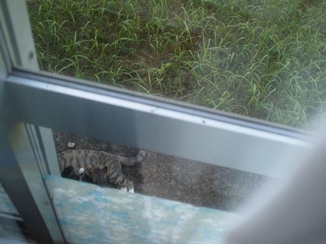 台風後の庭を眺めて_b0292900_18244163.jpg