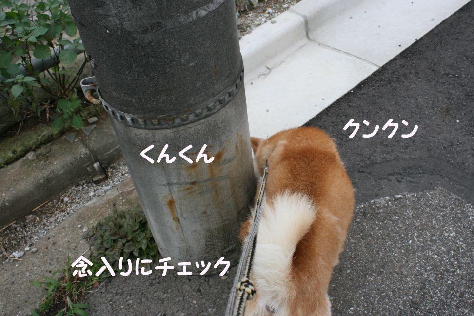 すーちゃんの家族さがし!_f0242002_21103407.jpg
