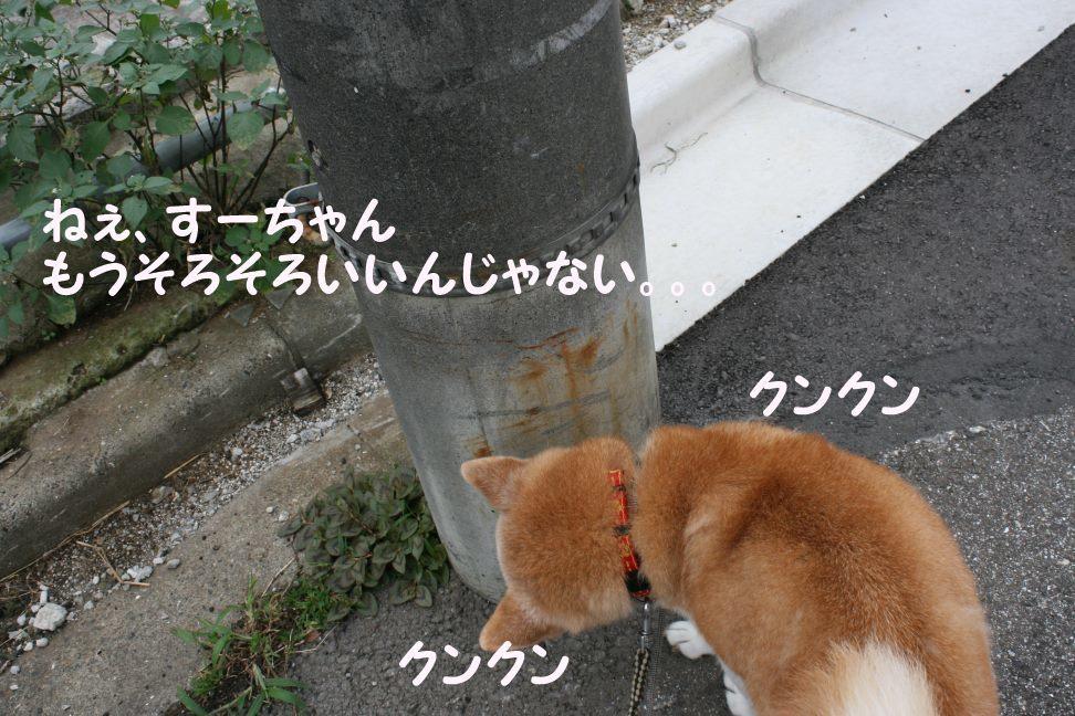 すーちゃんの家族さがし!_f0242002_21103867.jpg
