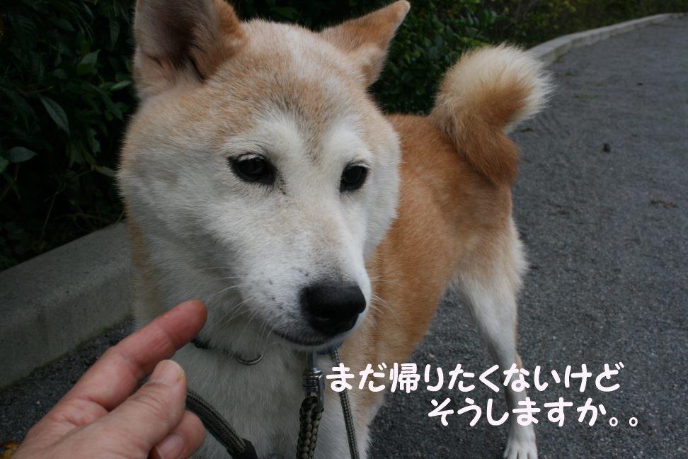 すーちゃんの家族さがし!_f0242002_21105253.jpg