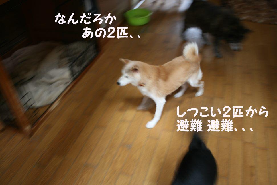 すーちゃんの家族さがし!_f0242002_21113566.jpg