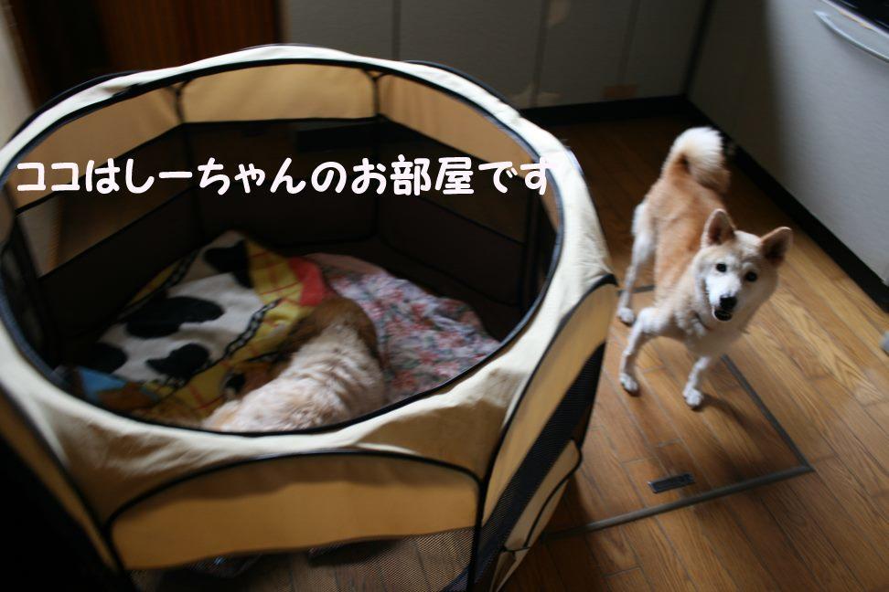 すーちゃんの家族さがし!_f0242002_21114903.jpg
