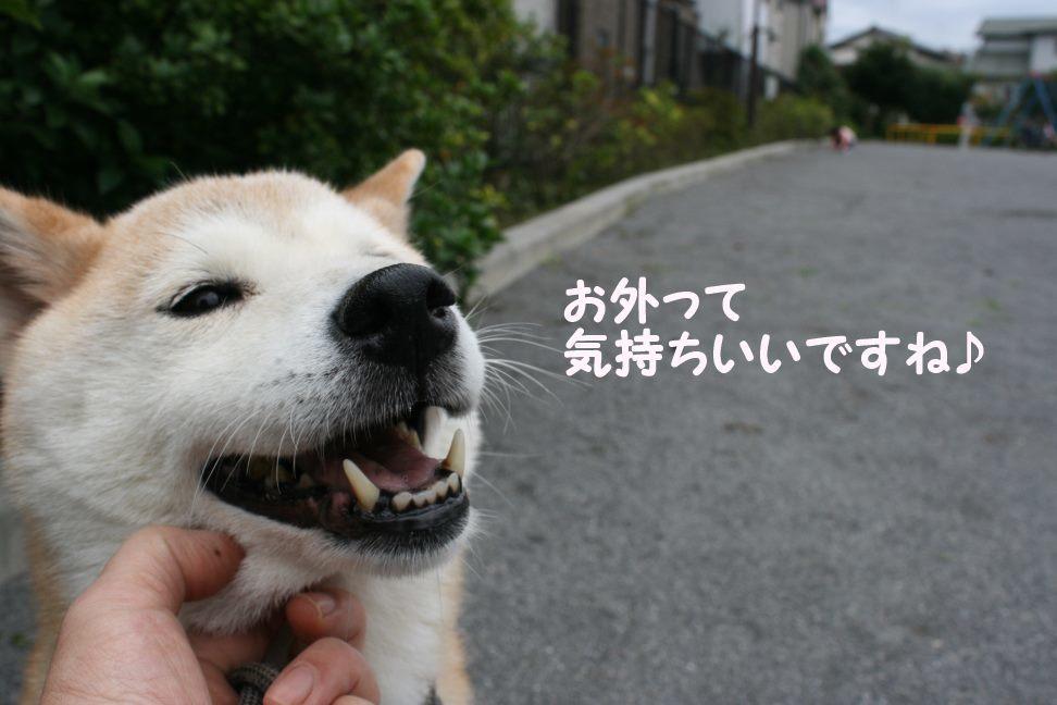 すーちゃんの家族さがし!_f0242002_21120910.jpg