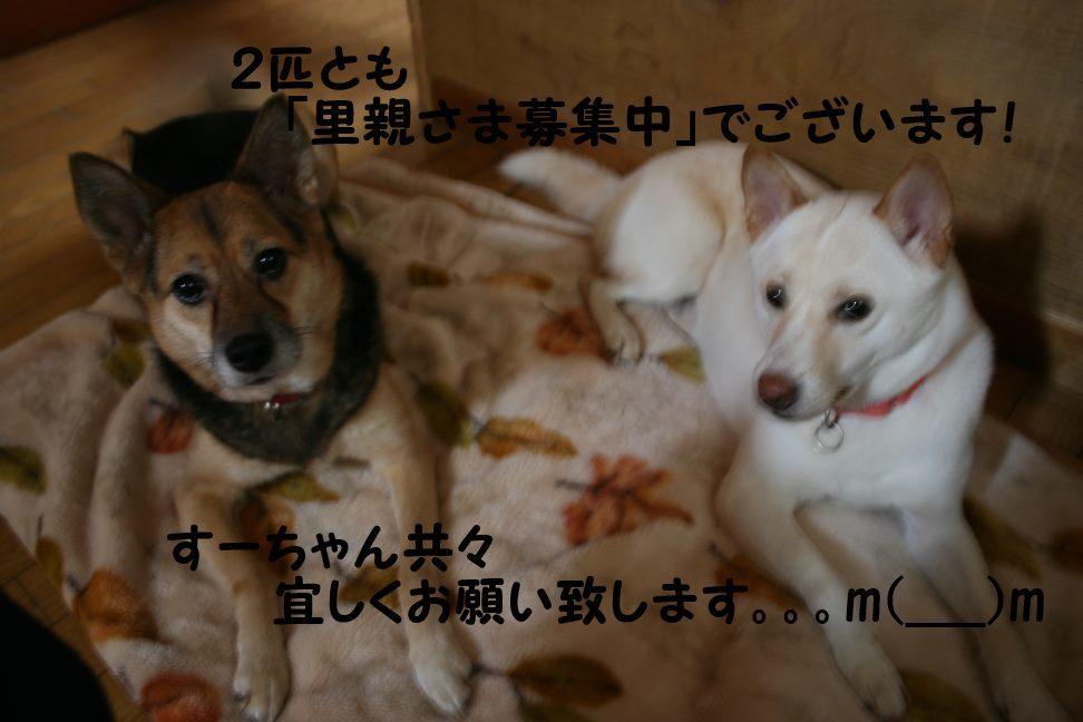 すーちゃんの家族さがし!_f0242002_21165390.jpg