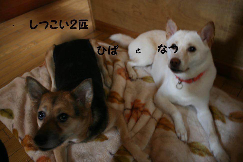 すーちゃんの家族さがし!_f0242002_21165920.jpg
