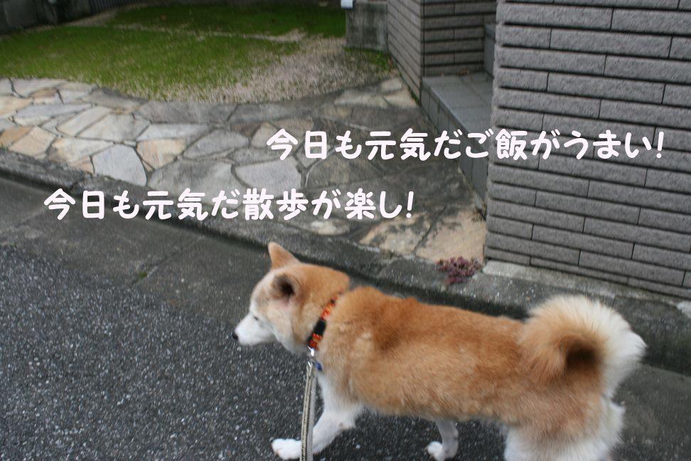 すーちゃんの家族さがし!_f0242002_21210209.jpg