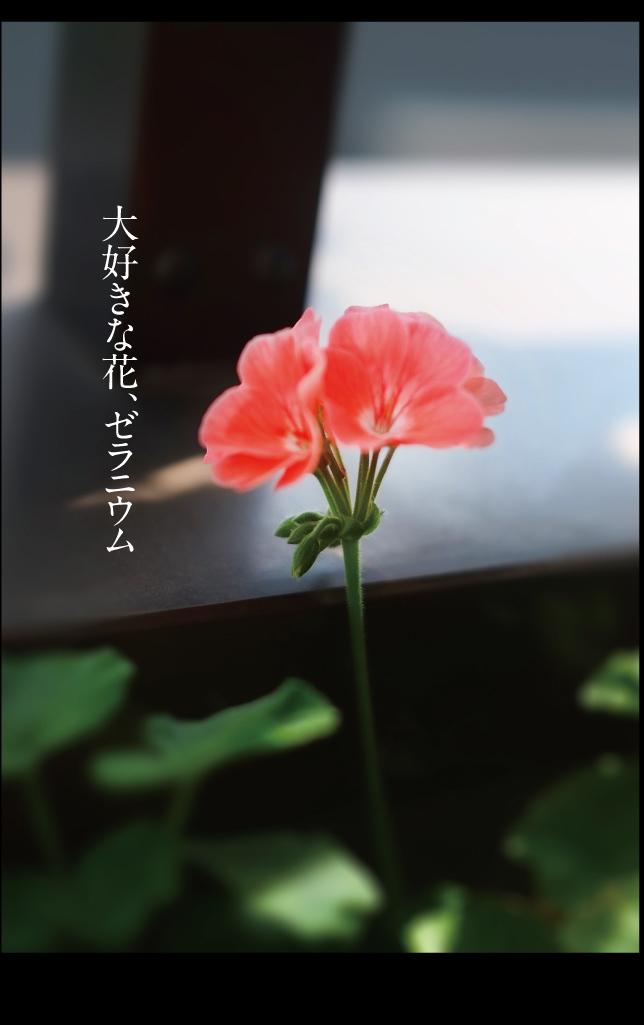 a0358016_10091081.jpg