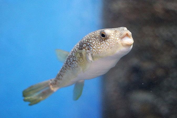 しながわ水族館:品川と海_b0355317_00323083.jpg