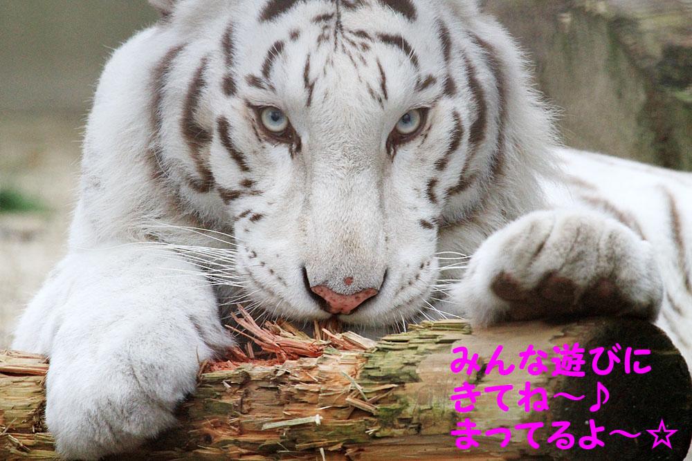 【電車とバスでの】宇都宮動物園アクセス方法_f0250322_21325899.jpg